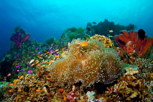 papua diving - selat dampier